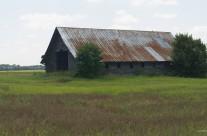 Barn, near Rowland, N.C.