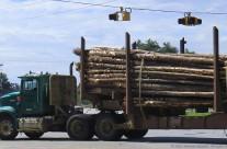 Hauling lumber, Cooperville, Ga.