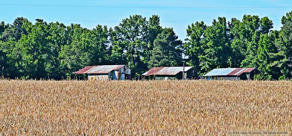 Tin-roofed buildings, Clarendon County, S.C.
