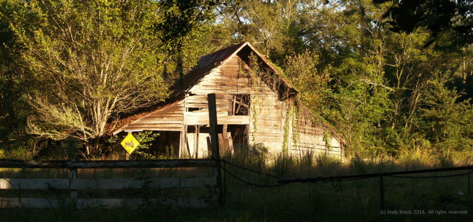 Old barn in morning light, near Jacksonboro, S.C.