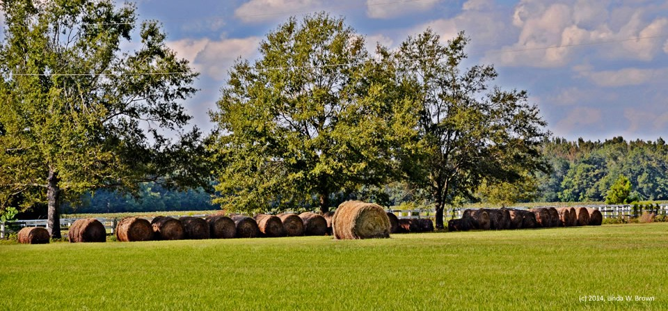 Bales of hay, Florence County, S.C.