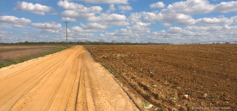 Orange dirt road, Tattnall County, Ga.
