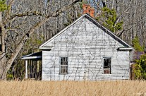 House and field, Williamsburg County, S.C.