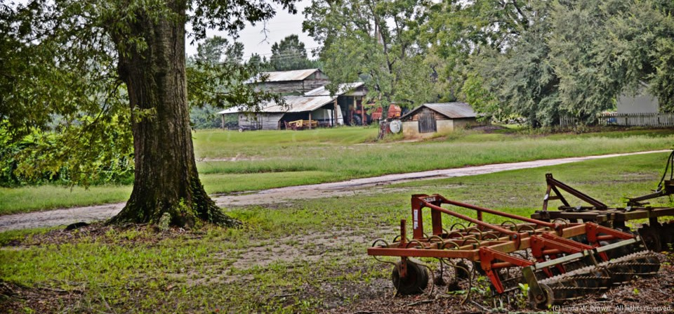 Pastoral scene, Clarendon County, S.C.